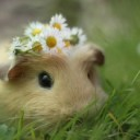 Hamster-Cute-Baby-19-HD-Images-Wallpapers