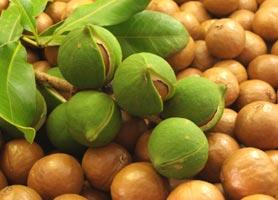 macadamia-nuts-2