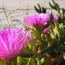 flower-19441_640