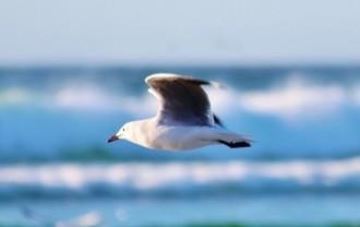 seagull-602364_640