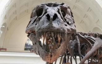 tyrannosaurus-447801_640