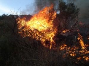 fire-107080_640