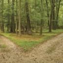 choice-crossroads-forest-green-life-Favim.com-180362