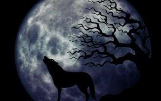 wolf-963107_640