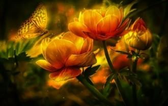 flowers-977988_640
