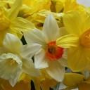 yellow-962924_640