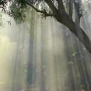 foggy-1077725_640